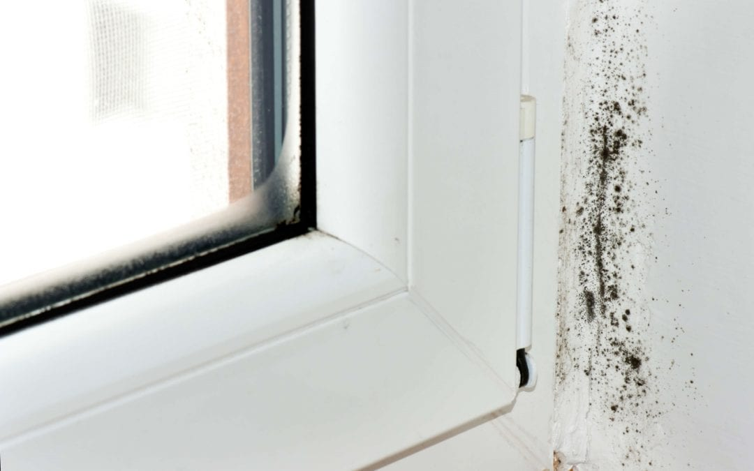 5 Signs of Mold Growth in Your Home